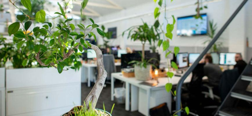 Plants for Office